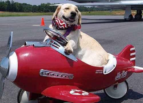 Mang theo Động Vật nuôi đi máy bay?